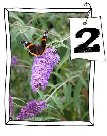Vlinders zijn prachtig om naar te kijken! #Vlinders, #vlinderplant.