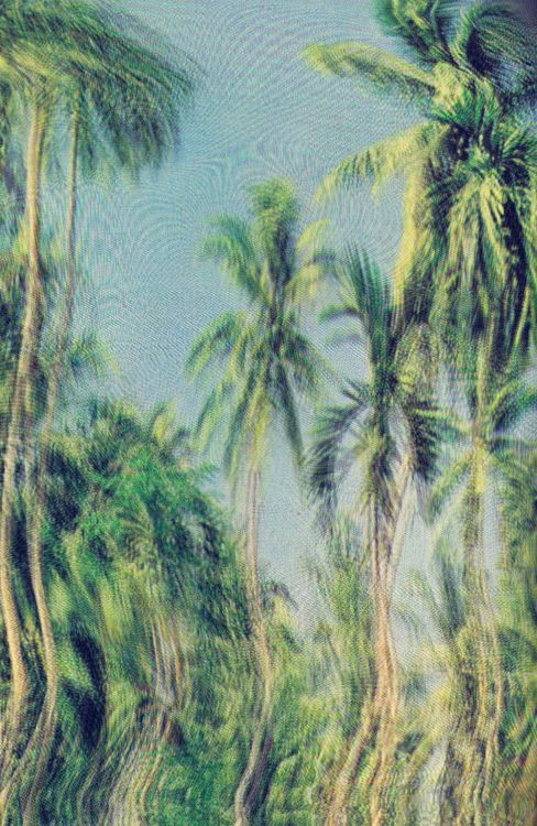 Palms: Filatur Maupetit, Dreams, Palms Trees, Islands, Travel Parties, Beaches Pools, Eye, The Beaches, Room