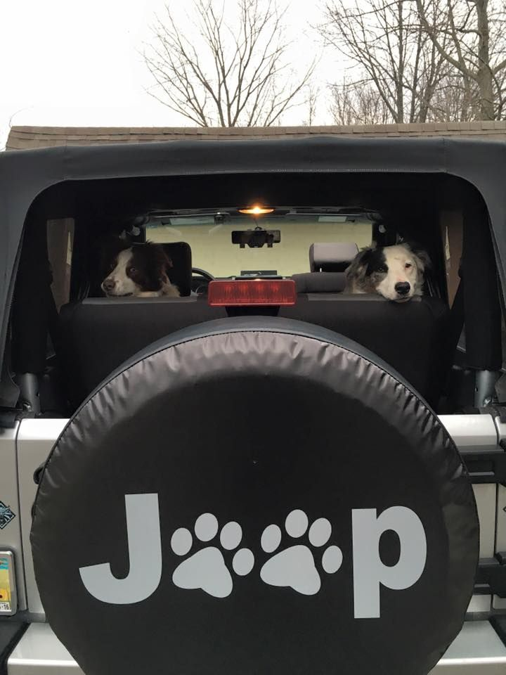 Jeep Paws Spare Tire Cover with the dogs in the Jeep