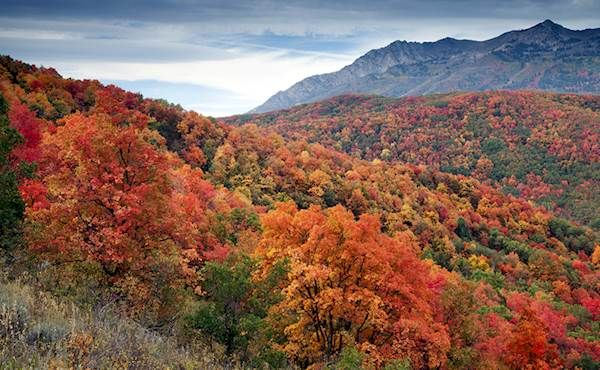 Sometimes we feel a little sorry for other states. With the red rock of the south, mountains of the Wasatch front and lakes and rivers of the Uintahs, Utah seems to be hogging all of nature's beauty. ...