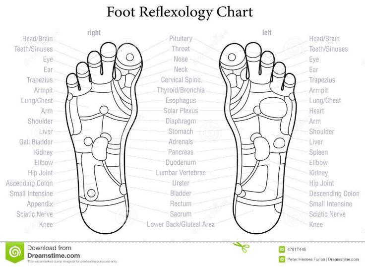 Reflexology Find Diagrams Diy Enthusiasts Wiring Diagrams