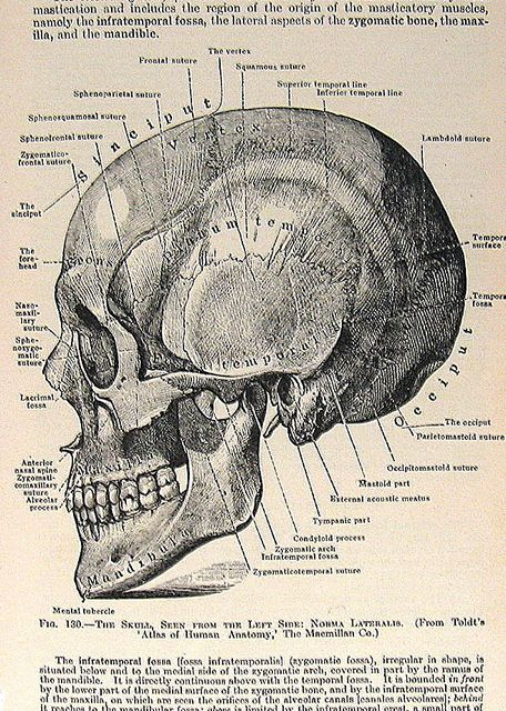 Vintage Medical Book Pages by ninainflorida, via Flickr #skull #medicalillustration
