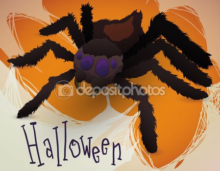 Hairy Spider with its Cobweb celebrating Halloween