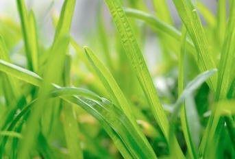 Come rimuovere le macchie di erba fondotinta frutta e inchiostro,macchie,toglire le macchie di erba,togliere le macchie di fondotinta, toglire le macchie di frutta, macchie di inchiostro,come toglire le macchie,