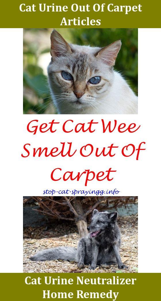 Cat Urine Odor Neutralizer Home Remedy Taraba Home Review