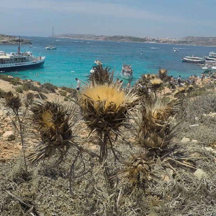 Is the island of Comino has something to offer?  #travel #Malta #comino #bluelagoon #visitMalta #maltaphotography  #lovemalta (w: Comino Island Malta - Blue Lagoon)