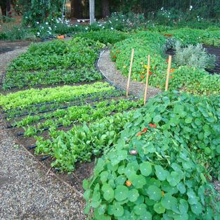 Vegetable Garden Design Ideas,