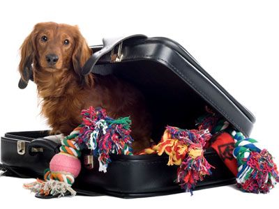 Our company offers you #Animal #moving services to relocate your pets to Texas, Oklahoma, Arkansas, and Louisiana.