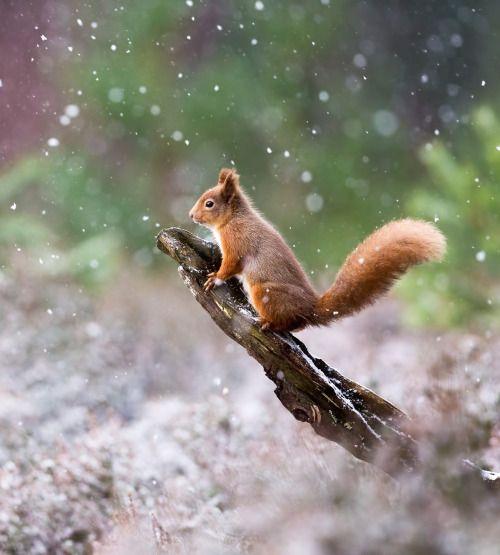 Winterland by © Sue Demetriou