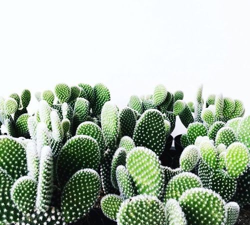 cacti, cactus, and plants Bild