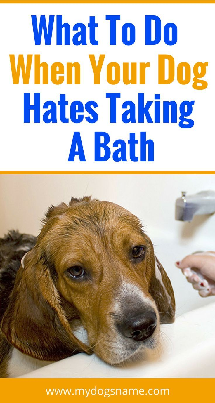 What To Do When Your Dog Hates Taking A Bath Dogs Dog Care Tips
