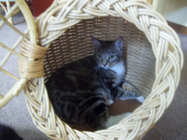 Mr Huff in the new basket.