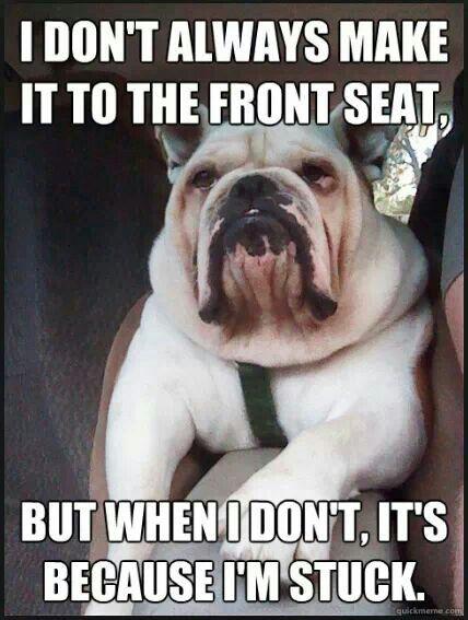 bulldog funny