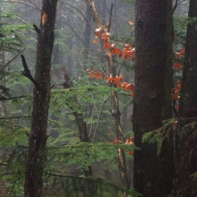 From a misty walk in the woods. I think this photo looks like a painting, and I would love to have a painting like this on my walls.