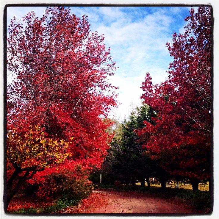 Autumn colour in Stanthorpe