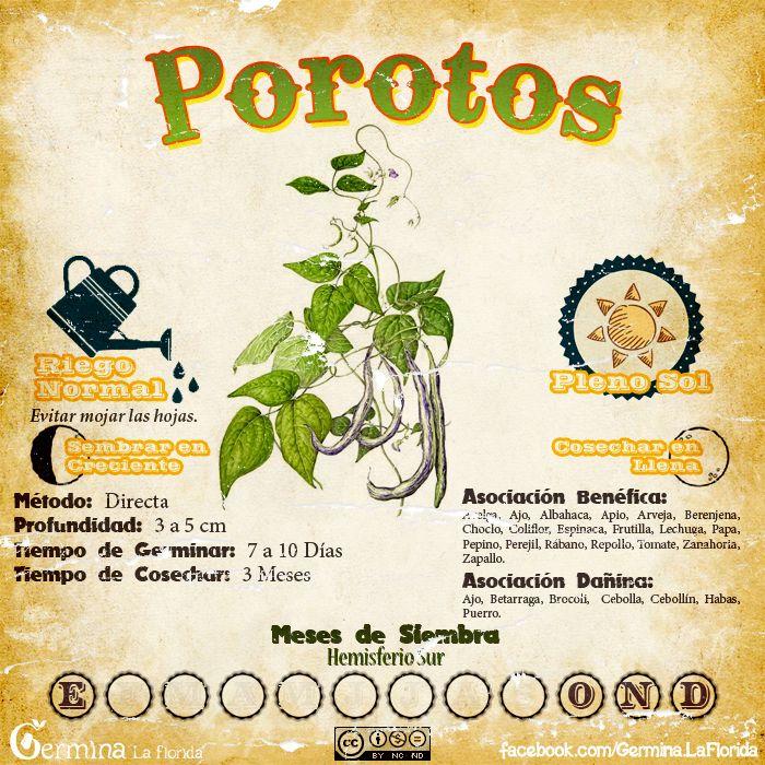 Les traemos este útil calendario de las Siembras del mes de Octubre, además de fichas con información específica de cada planta que podr...