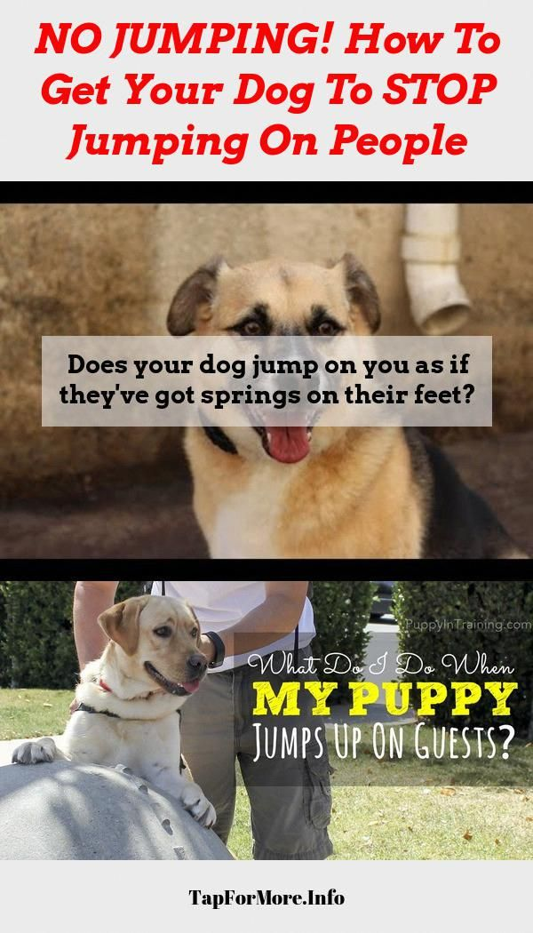 Stop Dog Jumping And Dog Training Tips Walks Check The Pic For