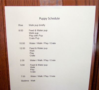 puppy crate training schedule | printed out the Puppy Schedule in bold print and posted it on the ...