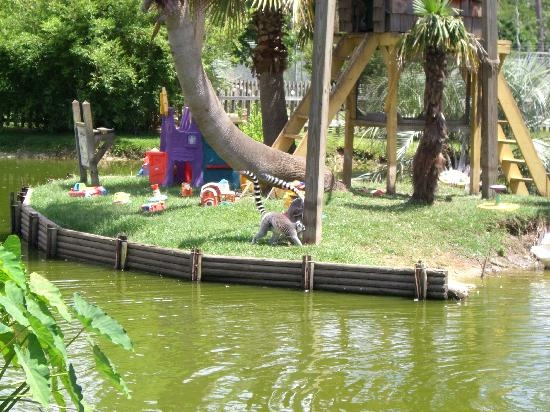 Alabama Gulf Shores Zoo - The Little Zoo That Could
