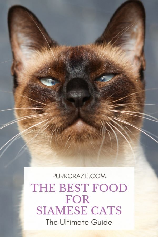 The Best Food For Siamese Cats The Ultimate Guide Mit Bildern