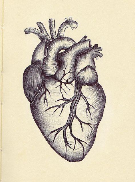 Anatomical Heart Drawing AHD05