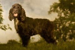 OLLIE -18th Century Classical Photography by Andrew Pinkham