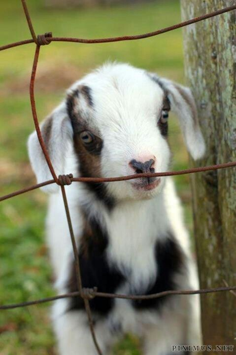 Don't provoke him, lest he realize he is small enough to fit through the holes in the fence!