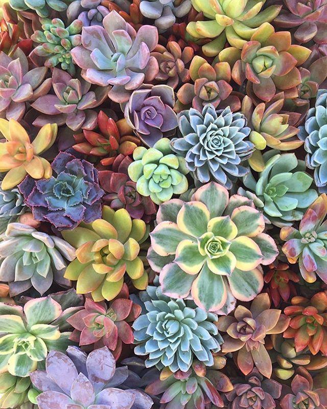 Sending some ️☀️ to Michigan ️ Succulents, Succulent
