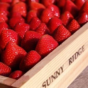 Sunny Ridge Strawberry farm, Victoria