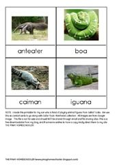 Rainforest Animals Control Cards (FREE PRINTABLE)