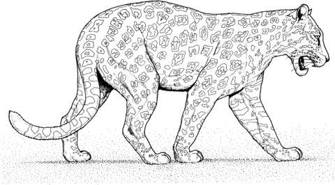 jaguar ausmalbilder #ausmalbilder #jaguar | dibujos