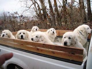 Pyrup truck  I ADDED- ANYBODY SEEN MY TRUCK- HE HEEEEEEEEEEE >>> I'LL TAKE THEM ALL !