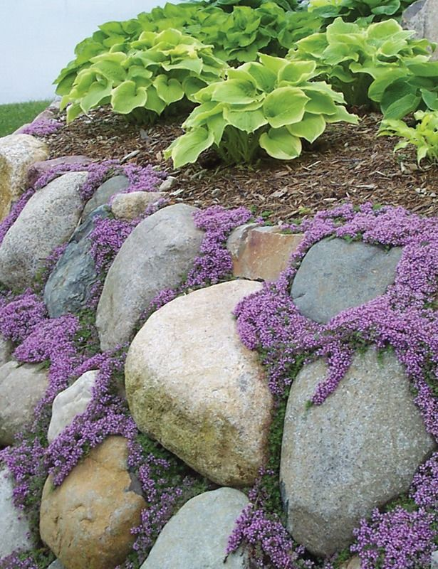 217 best images about full sun front yard on pinterest for Drought tolerant ground cover full sun