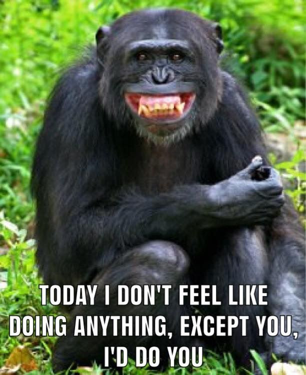 Pin By Jermaine Hou On ȧ'色idea Funny Picture Quotes Monkeys Funny Funny Quotes