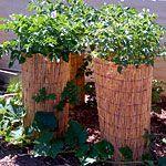 Potato towers!