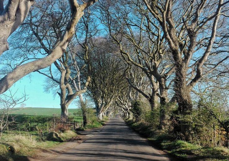 Dark Hedges, Irlanda del Nord (la strada del re di Game of Thrones!)