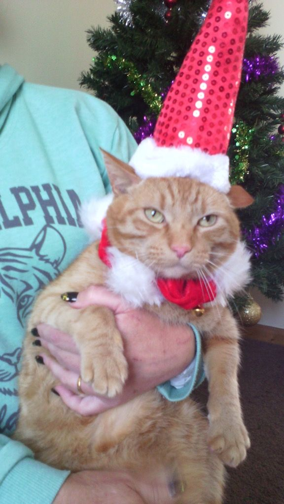 Our little Santa cat Ernie! He is so happy! Not! More like happy to get this off afterwards.