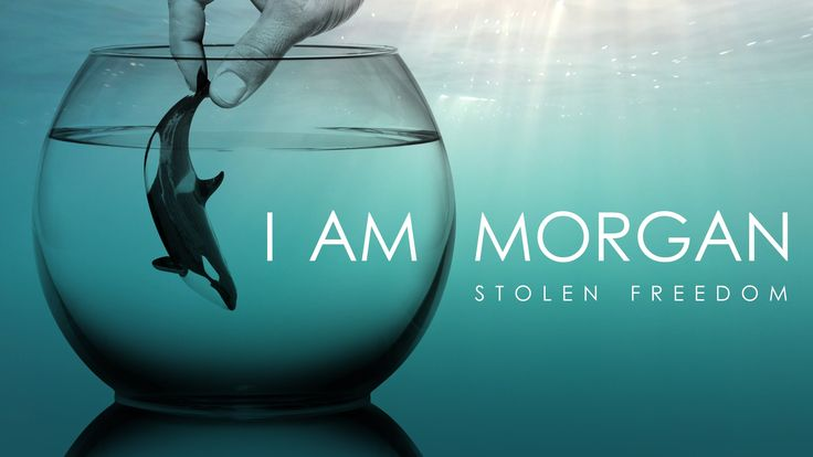 I AM MORGAN - STOLEN FREEDOM      Have you ever wondered what it would be like to see the world from an orca's point of view?