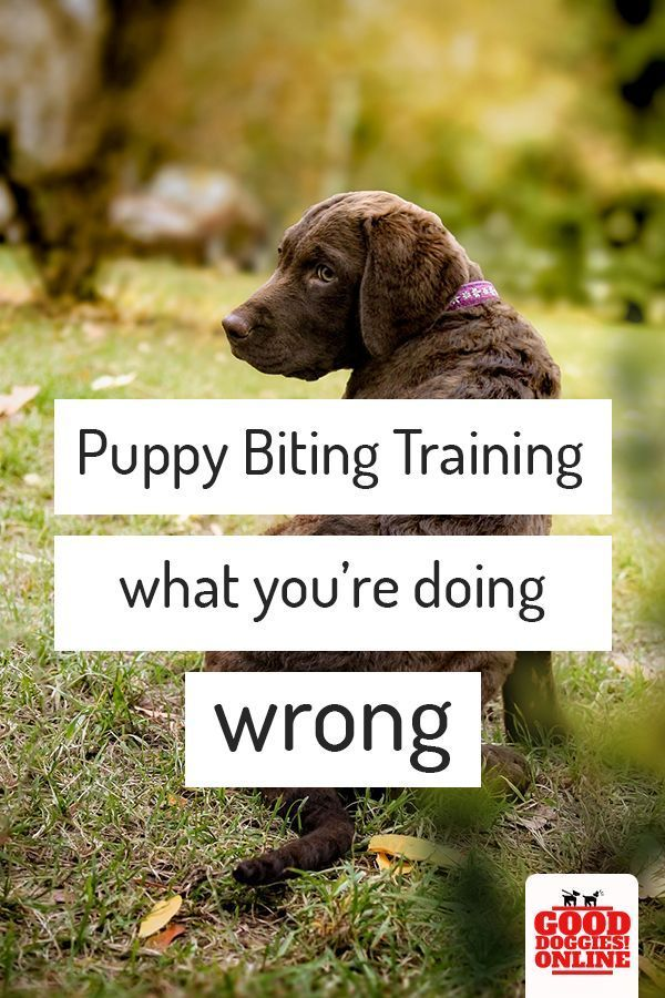 Are You Training Your Puppy Not To Bite Check Out These Puppy