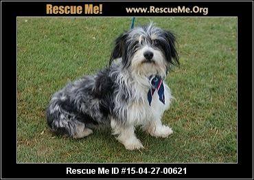 Texas Australian Shepherd Rescue ― ADOPTIONS ― RescueMe ...