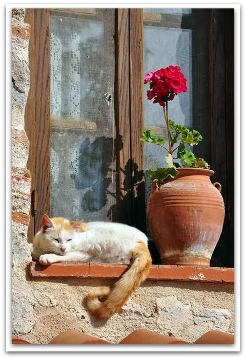 ~The cat and the flower  This photo was taken in a monastery at Meteora  in Thessaly, Central Greece~