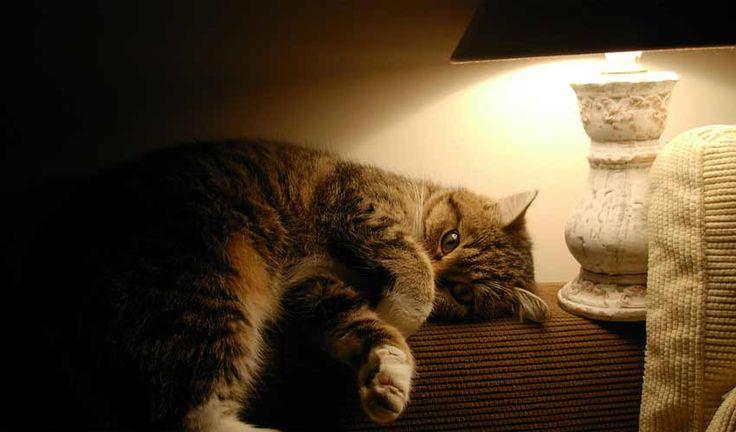find en lækker lampe til stuen eller andet