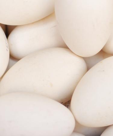 Huevos de Ganso Ibérico de Ganso Ibérico de Dehesa. Vaya tortillas vas a hacer!