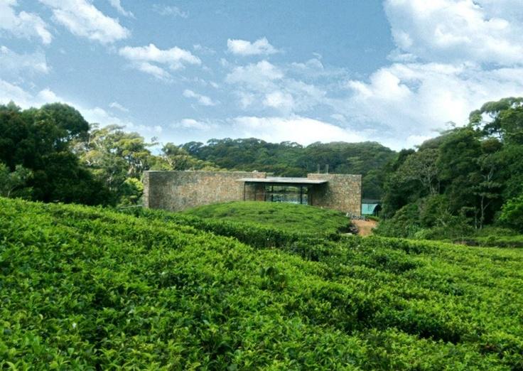 the rainforest eco lodge sinharaja sri lanka guests. Black Bedroom Furniture Sets. Home Design Ideas