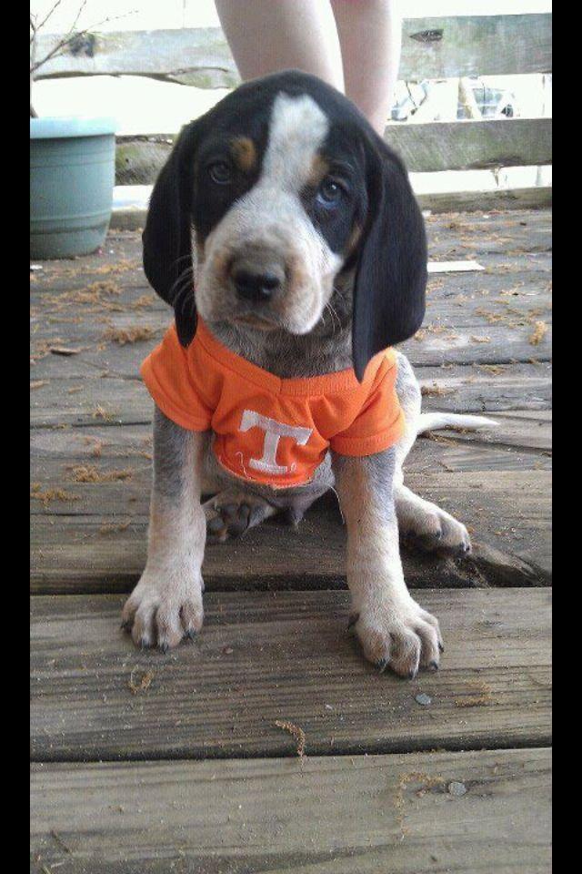 Ahhh.....baby Smokey! ♥ Vols ♥ Rocky Top.....Tennessee