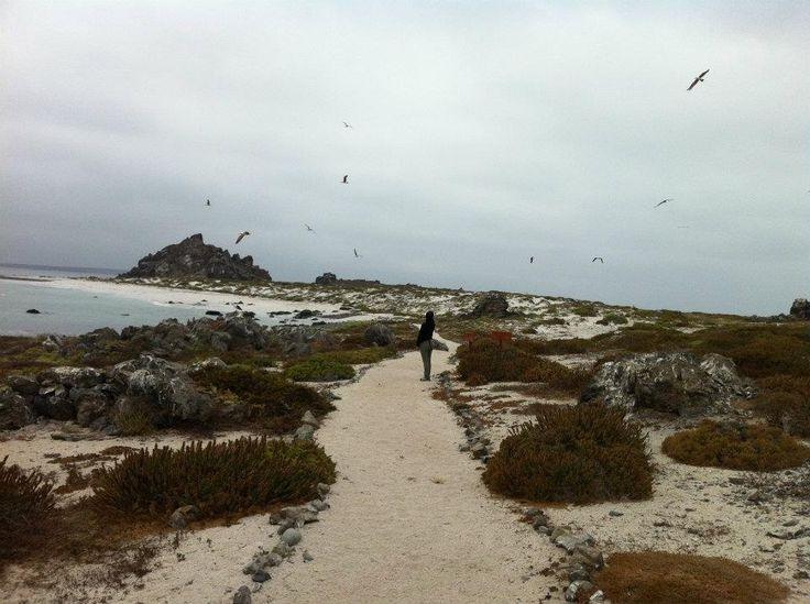 Punta de Choros Chile