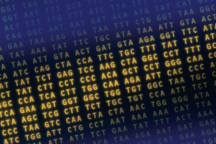 Cómo elegir enzimas de restricción. Las enzimas de restricción son enzimas que cortan ambos ADN de una y doble cadena. Cada enzima de restricción tiene una secuencia de nucleótidos específica, denominada sitio de restricción, que reconoce y corta. Las enzimas de restricción se utilizan para la ...