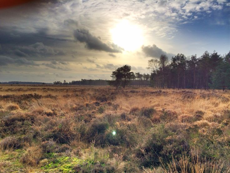 Drenths Friese Wold