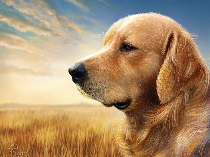 papel de parede Cachorro 3D