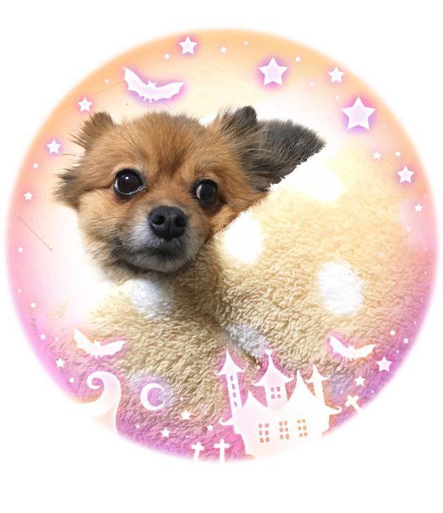タイトル…『見返り美人』  値段…愛心・夢心 円  700万人突破!!! 今話題になっている…!! そう、ぽつへい写真集❤️ おかげさまで大人気です✨✨ 妄想発売中💋 😘 ・ #pom#愛犬#犬バカ部#ポメラニアン#犬#ワンコ#もふもふ#ふわふわ#doglove#親バカ#親バカ部#写真#ラブ#カメラ女子#写真撮ってる人と繋がりたい#写真好きな人と繋がりたい#大好き#愛してる#乱ディーズ#かわいい#だいすき#可愛い#heart#instadog#まんまるおめめ部#口角キュキュッと部#まる会